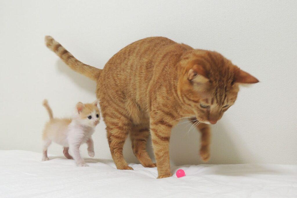 チャイと子猫モク