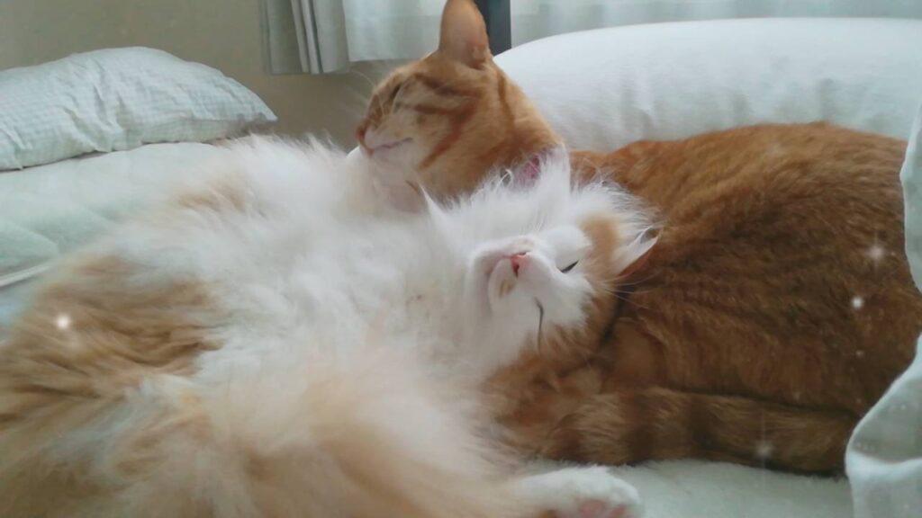 仲良く眠るチャイとモク